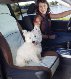 Cars And Trucks Traveling With Pets