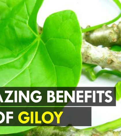 Benefits of Giloy juice