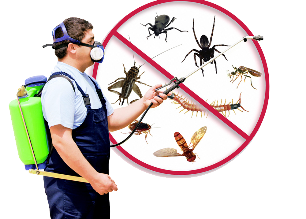 Beneficial Pest Control Reading To Get Rid Of Pests Instantly