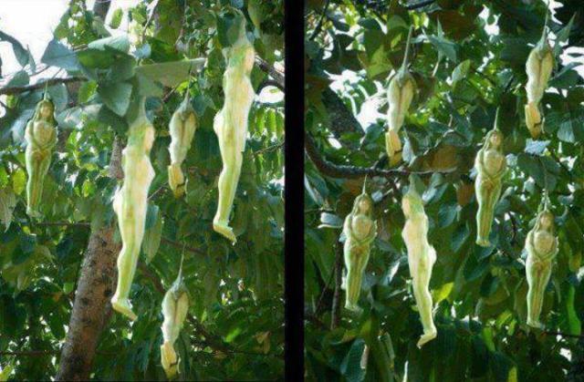 narilatha flower