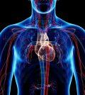 healthy circulatory system