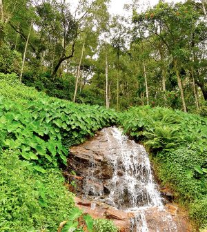 Natural Beauty of Coorg