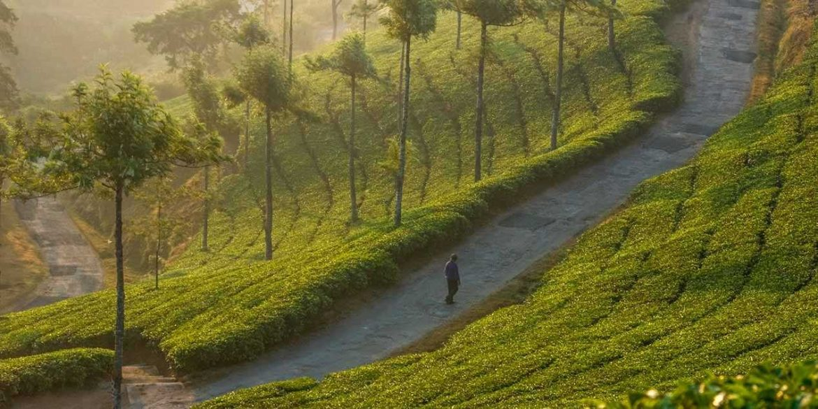 Munnar Haven of Peace