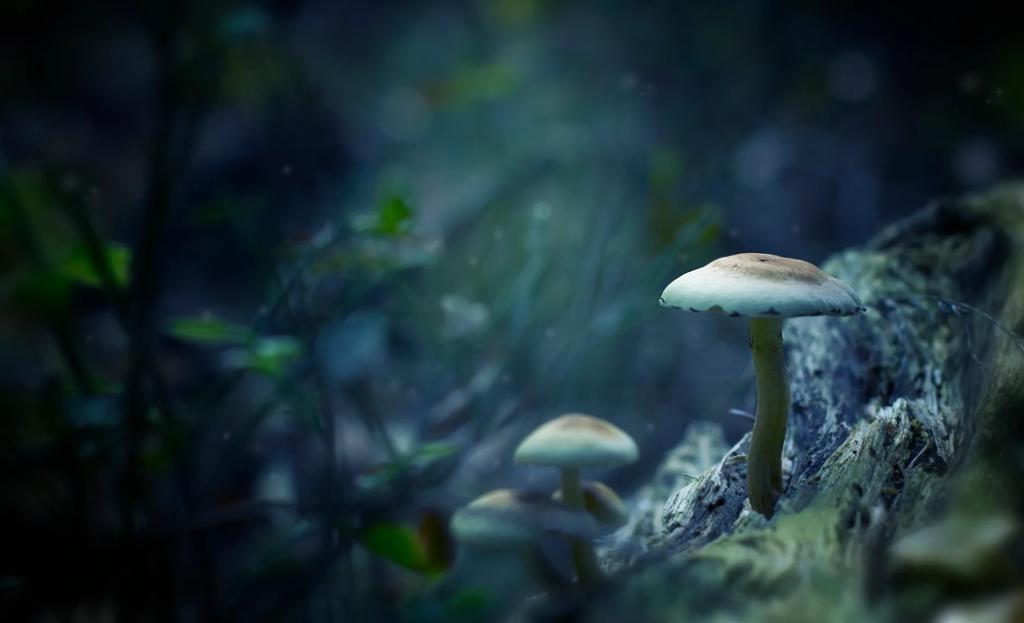Benefits Of Microdosing Magic Mushrooms