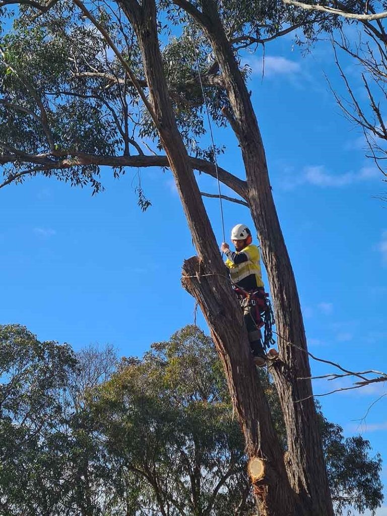 Professional Tree Pruning